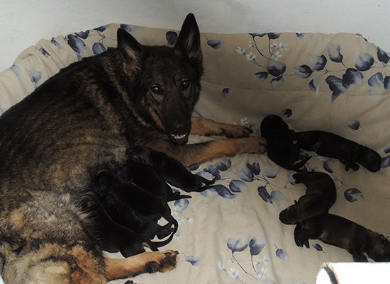 Annie Lord G Litter 4 days 2