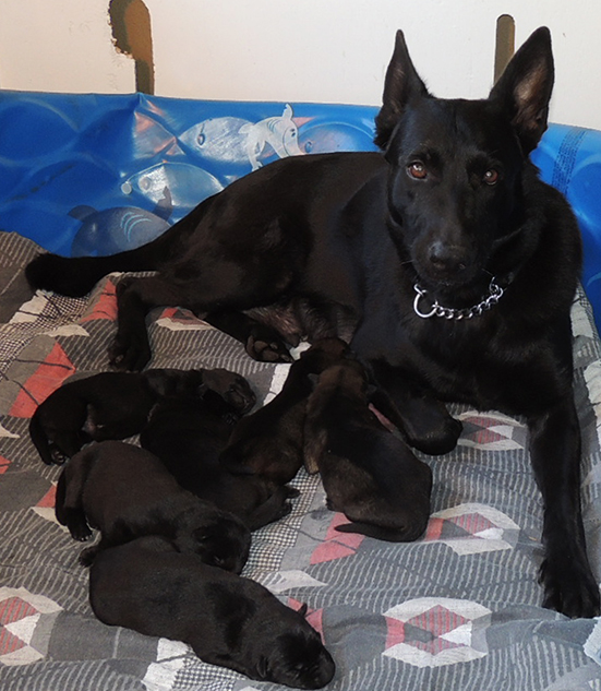 Hena with N Litter @ 7 days old