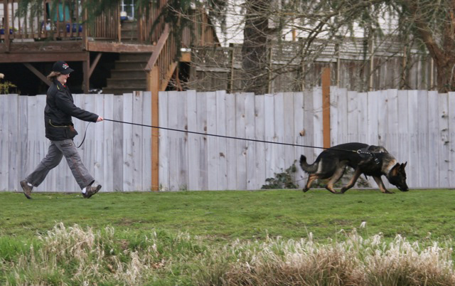 Wuff Jager Air Trailing 15 mos