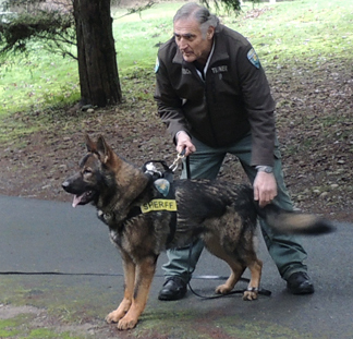 Sarge Apprehension Training 15 mos