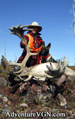 Sentinelle s Big Bull Caribou